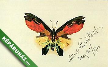 Pillangó terjed az áruopciókban