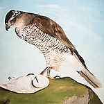 Csontváry Kosztka Tivadar: Sólyom és a hófajd (id: 19700) vászonkép óra