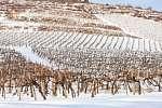 Szőlőtőkék télen (id: 21300) falikép keretezve