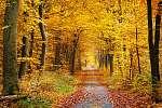 Csontváry Kosztka Tivadar: Őszi erdő (id: 11501) poszter