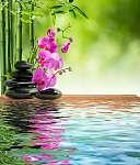 Albert Gebhard: rózsaszín orchidea fekete kõ és bambusz a vízen (id: 4604) vászonkép