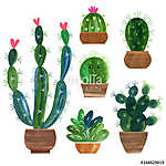 Kaktuszgyűjtemény (id: 11607)