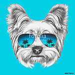 Portrait of Yorkshire Terrier Dog with mirror sunglasses. Hand d (id: 14907)