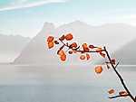 A természet csodás színösszhangja (id: 17509) falikép keretezve