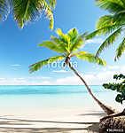 palms on Caribbean beach (id: 16410)