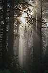 Párás erdő (id: 17810) többrészes vászonkép