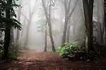 Ködös erdei sétány (id: 17812) többrészes vászonkép