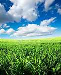 Zöld rét felhőkkel (id: 1812) vászonkép óra