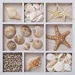 Seashells fehér dobozban (id: 5412) vászonkép óra
