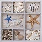Seashells fehér dobozban (id: 5413)