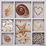 Seashells fehér dobozban (id: 5414) poszter