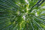 Early morning sky view through bamboo stalks at Beautiful Sagano (id: 13115)