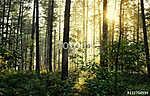 Moody forrest with sunlight (id: 15915) többrészes vászonkép