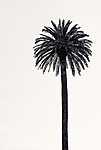 Tökéletes pálma (id: 18315)