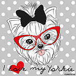 Cute Yorkshire Terrier (id: 19015)