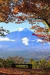 Az őszi szezon a Mt. Fuji Japánban, szép sárga színnel (id: 9415) poszter