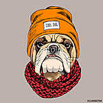 Bulldog portrait in a hipster hat and with Knitted scarf. Vector (id: 14416)