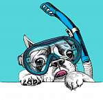 Portrait of a French Bulldog in diving mask with tube on blue ba (id: 14516)