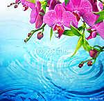lila orchidea hullámos kék vízzel - frissesség fogalmát (id: 4616) vászonkép óra