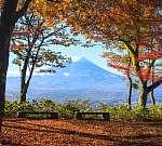Az őszi szezon az Mt. Fuji Japánban, szép sárga színnel (id: 9416) poszter