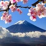Mt Fuji és Cherry Blossom (id: 9417) poszter