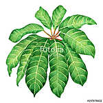 Watercolor painting green leaves,palm leaf isolated on white bac (id: 14718) többrészes vászonkép