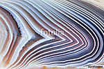 Amazing Banded Agate Crystal cross section as a background. Natural light translucent agate crystal surface, Gray abstract expre (id: 15818) tapéta