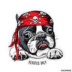 French Bulldog portrait in a pirate bandana. Vector illustration (id: 14419)