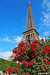Eiffel-torony a vörös rózsa bokor mögött (id: 9320) vászonkép óra