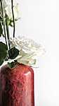 Rózsa piros vázában (id: 17321) tapéta