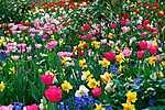 Tavaszi virágoskert (id: 824) vászonkép óra