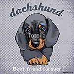 The poster with the portrait of the dog Dachshund. Vector illust (id: 14425) falikép keretezve