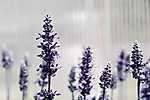 Tavaszi virágok (id: 17825) tapéta