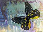 butterfly( Thai background ) (id: 13826) falikép keretezve