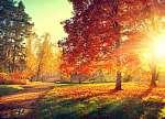 Őszi jelenet. Esik. Fák és levelek napfényben (id: 6326)