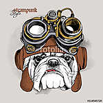 The image of the bulldog portrait in the Steampunk helmet. Vecto (id: 14427) tapéta