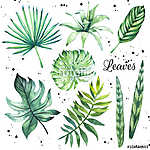 Illustration with tropical leaves. Watercolor set of green leave (id: 14727)