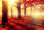 Őszi jelenet. Gyönyörű őszi park napfényben (id: 6327) vászonkép