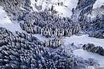Tűleveles erdő télen (légi felvétel) (id: 12328)