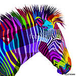 colorful zebra isolated on white background (id: 15628)