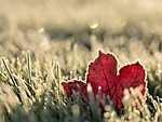 A kertre leszállt a dér (őszi falevél a fűben) (id: 14330) tapéta