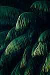 Cikász levelek (id: 18432)