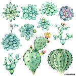 succulents in watercolor (id: 14633) poszter