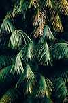 Cikász levelek (id: 18433) poszter