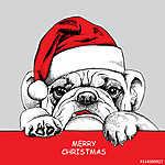 The poster of portrait bulldog in the santas hat. Vector illustr (id: 14434)
