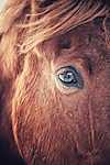 A ló pillantása (id: 17835)