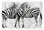zebrák (id: 5638)