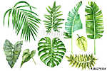 Set of tropical watercolor leaves (id: 14642) poszter