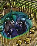 vízcsepp páva tollal (id: 6342) falikép keretezve
