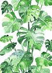 Monstera leaves background. Beautiful watercolor pattern made of (id: 14644)